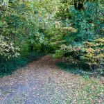 Cranford Park 2013