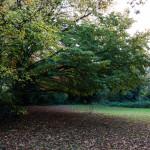 Cranford Park Fall 2013